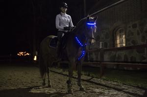 LED Brösta